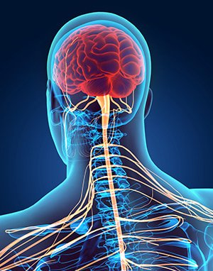 kyselina listova na mozek