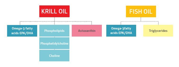 kril versus fish oil, kril versus rybi tuk